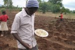 Planting maize and pumpkins