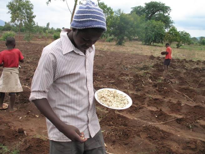Planting maize and pumpkins